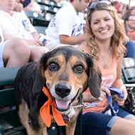 You can bring your dog to Comerica Park on June 27