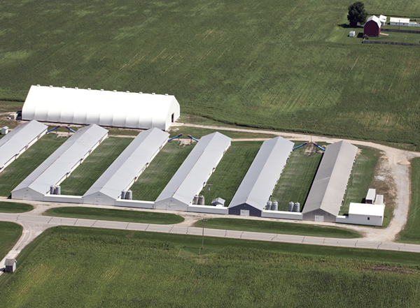 A supplier to Herbruck's Farm. Each shed holds tens of thousands of birds. To put the size in perspective, reference the semi-trailers just to the right of the sheds. Note that there are zero birds outdoors. - COURTESY OF CORNUCOPIA INSTITUTE