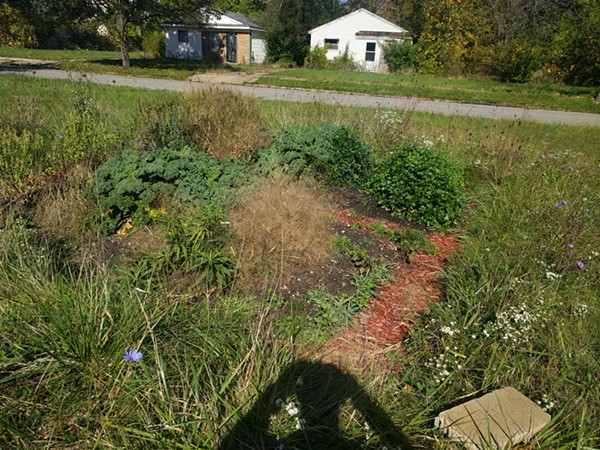 An overgrown bed at the garden pictured in October. - COURTESY OF ROBERT BURTON-HARRIS