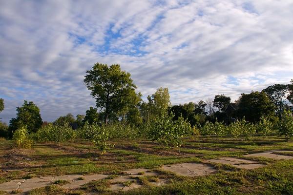 Hantz Farms circa 2017 - STEVE NEAVLING
