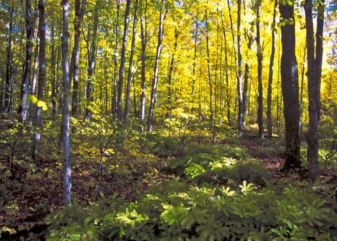 Hiawatha National Forest has 8,000 inventoried roadless acres. - BOB NICHOLS/USDA