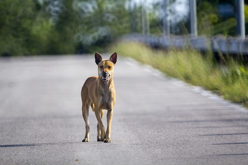 A stray dog, like one of Detroit's imaginary 50,000 strays that the media would have you believe roam the streets. - SHUTTERSTOCK