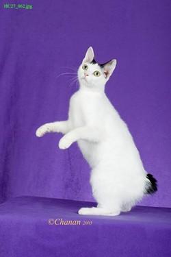 PHOTO VIA JUST CAT-IN AROUND, FACEBOOK