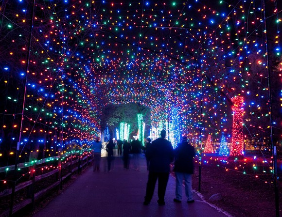 """The insane amount of lights at """"Wild Lights"""" at the Detroit Zoo. - DETROIT ZOO FACEBOOK"""