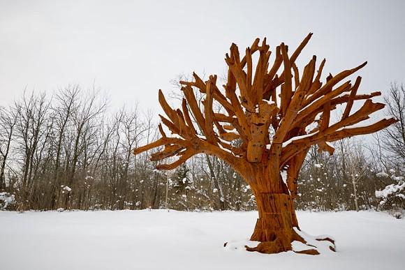 Iron Tree - COURTESY PHOTO