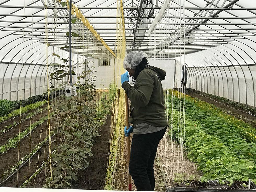 RecoveryPark's pilot farm. - ANNA KOHN