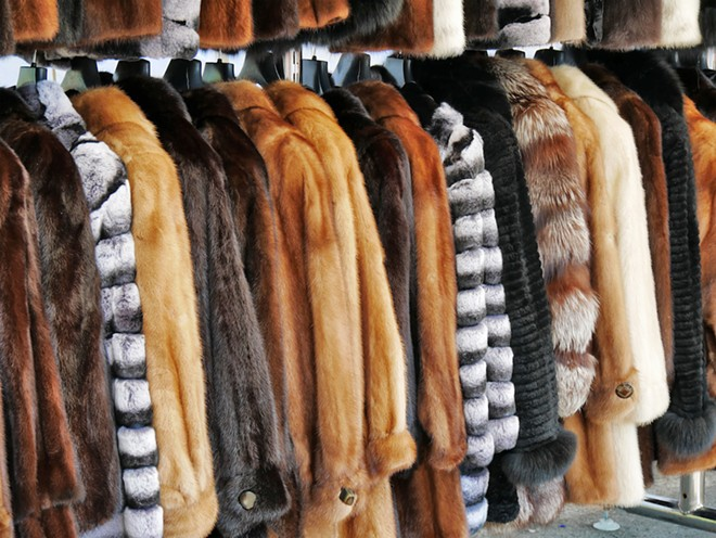 No new fur is the latest policy in Ann Arbor. - SHUTTERSTOCK.COM