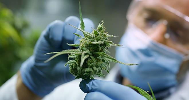 """""""As research continues and more funding becomes available, the sky's the limit on - what cannabinoids will find and how they respond to the body and the mind,"""" - Robert Dodge, owner and CEO of Ubaked, tells Metro Times. - SHUTTERSTOCK"""