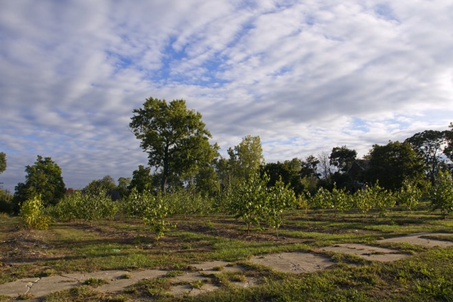 Trees planted on vacant land as part of Hantz Farms. - STEVE NEAVLING
