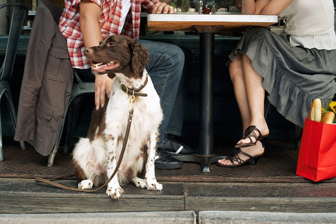 This could be your dog loving life at a patio restaurant. - SHUTTERSTOCK.