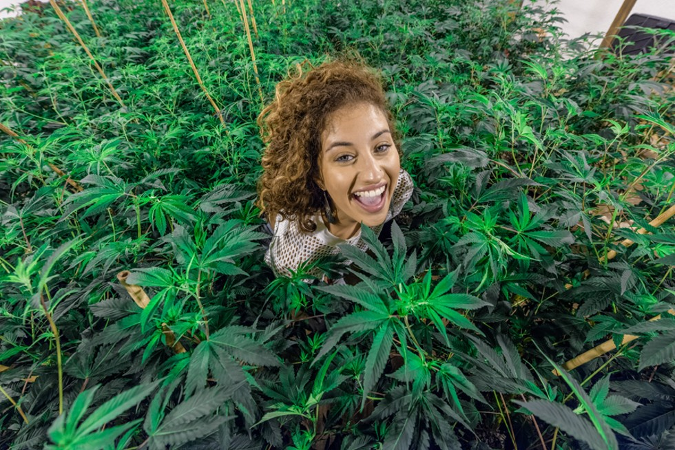 Asciutto is now a vocal proponent of medical marijuana. - DOUG COOMBE/LEMON HAZE GROWN AT GHOST BUDSTER FARM
