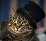 A Cat Cabaret II: A Benefit for Ferndale Cat Shelter