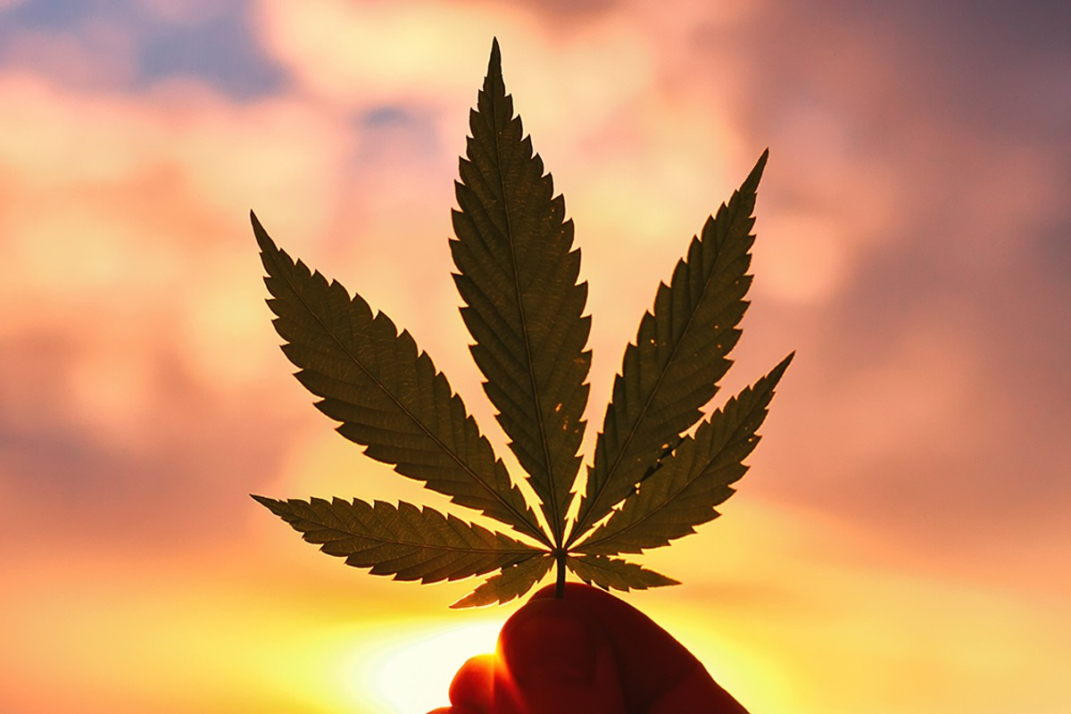 Marijuana could be a big deal in the 2020 presidential election.