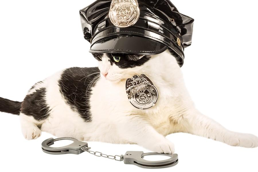 SHUTTERSTOCK (NOT ACTUAL POLICE CAT)