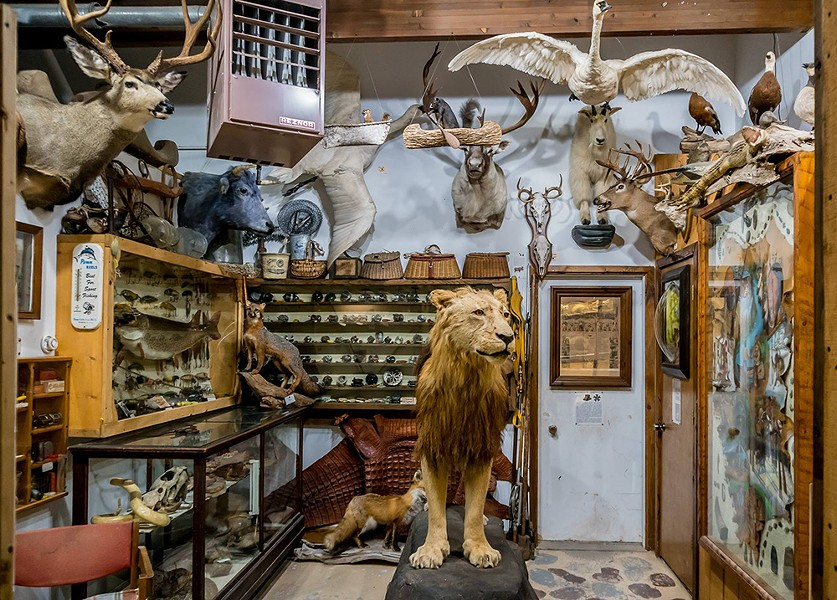 Guntzviller Taxidermy & Spirit of the Woods Museum, Williamsburg. - COURTESY PHOTO