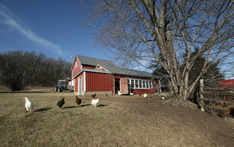 Chickens on an organic farm in Wisconsin. - FACEBOOK