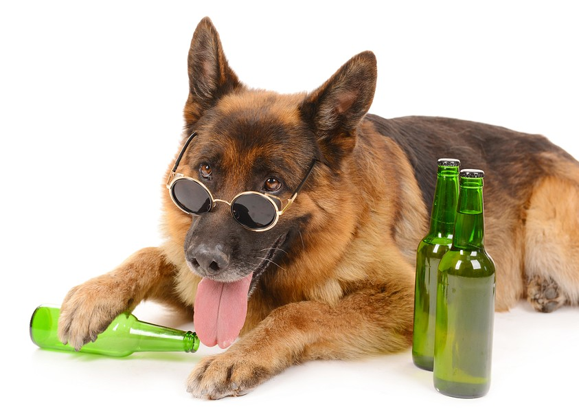 Note: do not feed your dog booze. - SHUTTERSTOCK