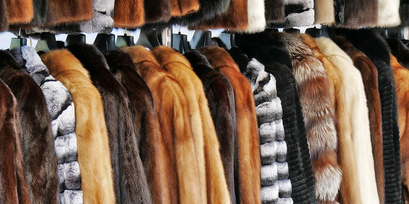 No new fur is the latest policy in Ann Arbor.