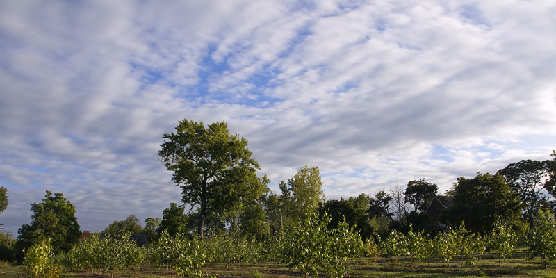 Trees planted on vacant land as part of Hantz Farms.