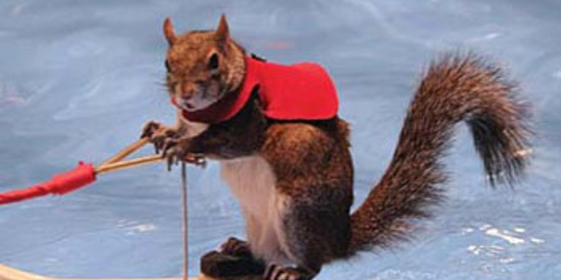 Twiggy the waterskiing squirrel is coming to Detroit