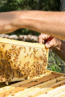 It's all about the bees for this Grosse Ile beekeeper