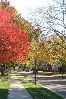Neighborhood street in Rochester