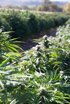 USDA approves Michigan's industrial hemp plan
