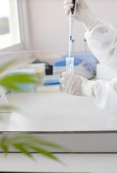 Cannabis lab file photo.