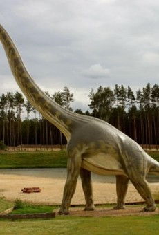 What happens when a Brontosaurus gets a sore throat?