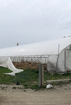 On a recent visit, Metro Times found six of the eight hoop houses were empty, filled with dead vegetation and some trash, their plastic walls torn open.