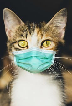 Cats are vulnerable to COVID-19 infections.