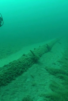 In 2013, the National Wildlife Federation sent divers to look at Enbridge, Inc.'s aging straits pipelines, finding wide spans of unsupported structures encrusted with exotic zebra mussels and quagga mussels.
