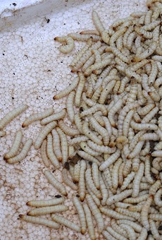 More maggots and mold found in Michigan's prison food