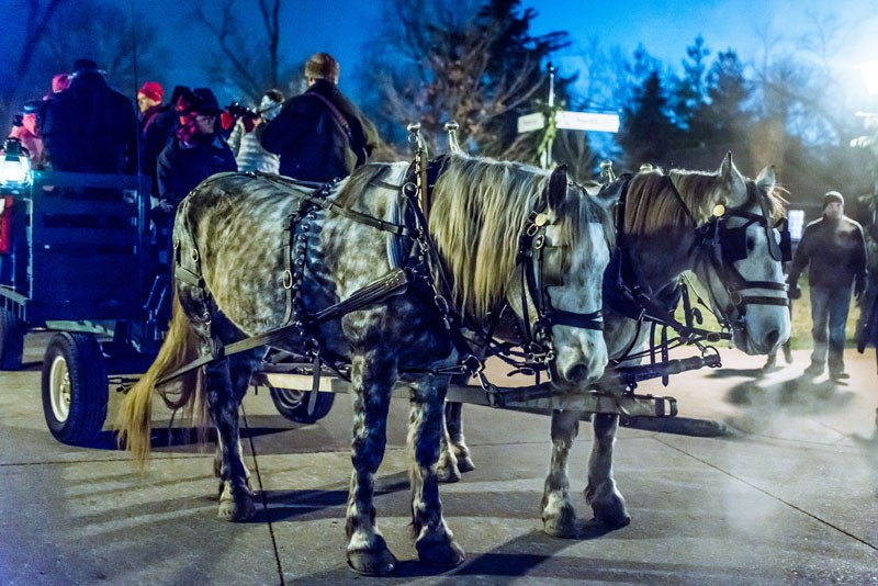 horse-drawn-carriage-rides-during-holiday-nights-in-greenfie.jpg