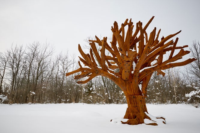 Iron Tree - COURTESY PHOTO