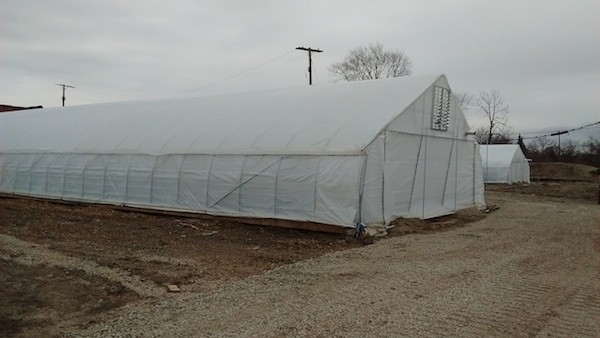 Luckily, Recovery Park's plastic greenhouses could stand the wind. - PHOTO BY MICHAEL JACKMAN