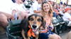 A dog, probably named Buster, having the time of his life at Comerica Park.
