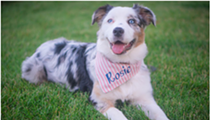 Michigan Humane Society holds contest for 2019 calendar