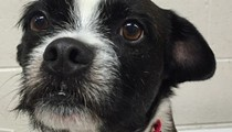 Florida woman's missing dog turns up in Detroit two years later [VIDEO]