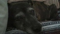 Dog nearly blinded in Drano attack during Hamtramck home invasion