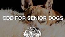 CBD for Senior Canines