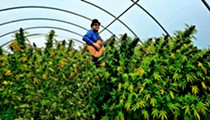 Tom Wall's journey into the secret life of marijuana plants