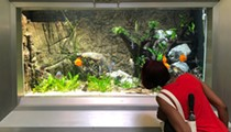 Detroit's Belle Isle Aquarium reopens from pandemic with $1.2 million makeover, new fish