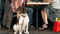 Dogs may soon be allowed to sit with you at restaurant patios if new bill passes