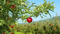 Michigan apple crop is down four million bushels — what it means for local apple orchards