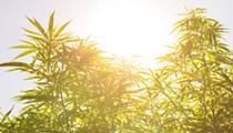 A brave new world for marijuana in Michigan