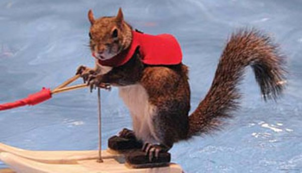 Twiggy the waterskiing squirrel is coming to Detroit ...