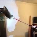 Video: Raccoon family invades Michigan home, epic fight to avoid capture ensues