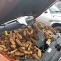 Squirrel goes nuts, stores 50 lbs of pine cones in the engine of Michigan man's car