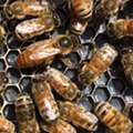 Bees In The D holds fundraiser after car plows through its hives